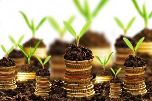 Golden coins in soil with young plant isolated. Money growth con